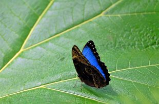 butterfly-san-ramon