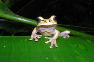 frog_20