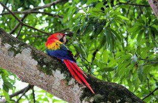 macaw osa