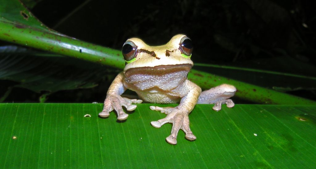 frog_20