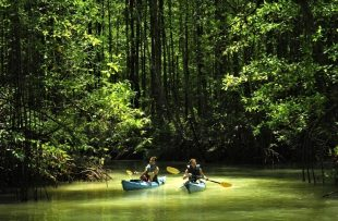 damas mangroves kayaking manuel antonio