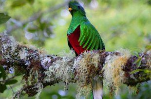 quetzal-2