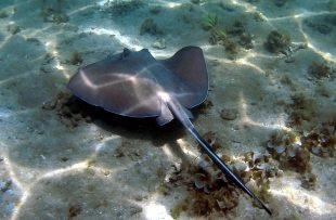 snorkelling Caribbean Coast