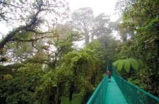 monteverde canopy walkways